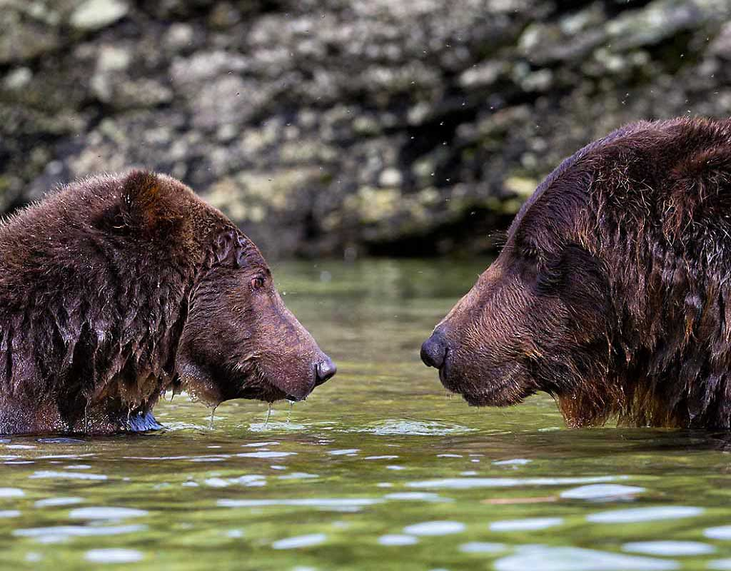 Kodiak Wildlife Viewing