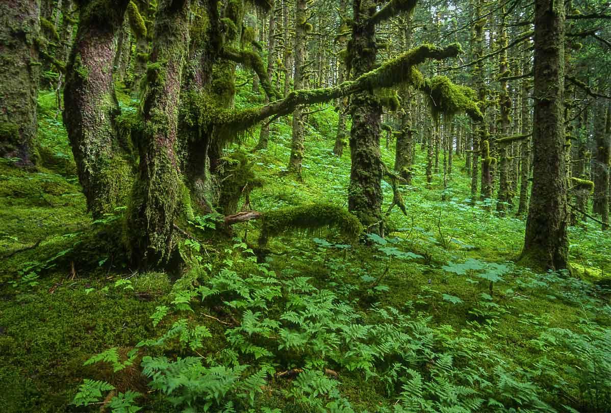mossy-trees-new