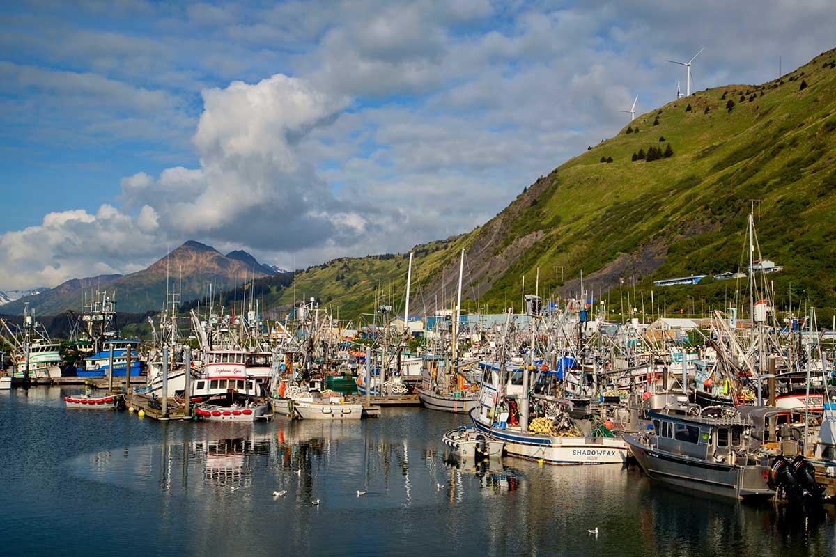 Kodiak Wildlife Cruises