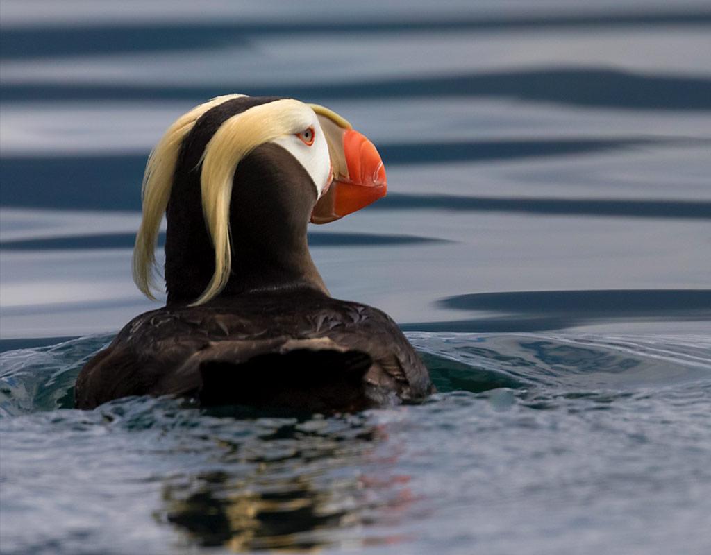 Kodiak Wildlife Cruise