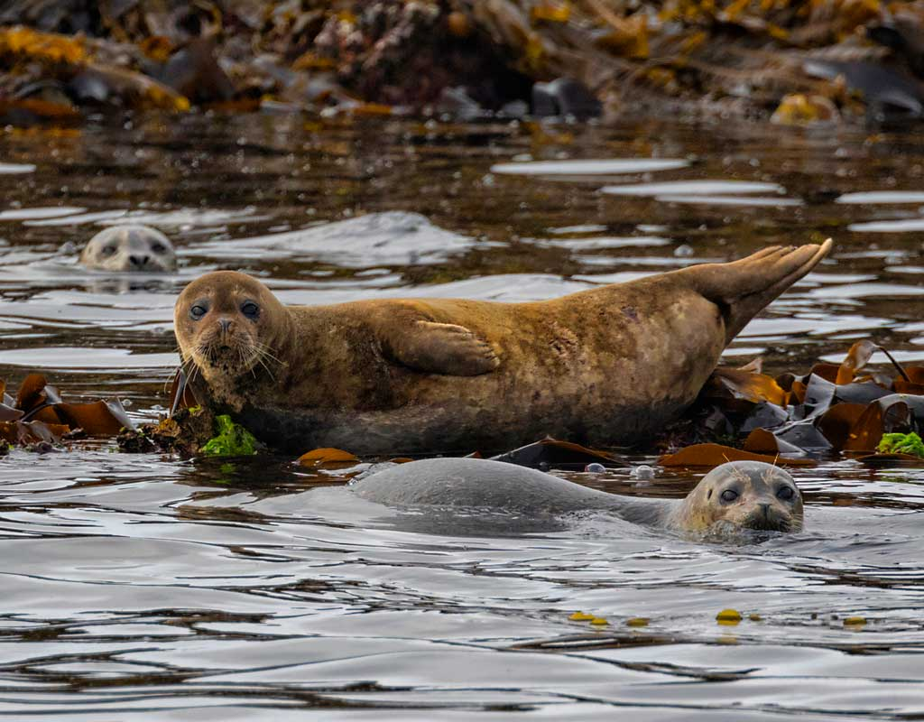 Kodiak Wildlife Viewing